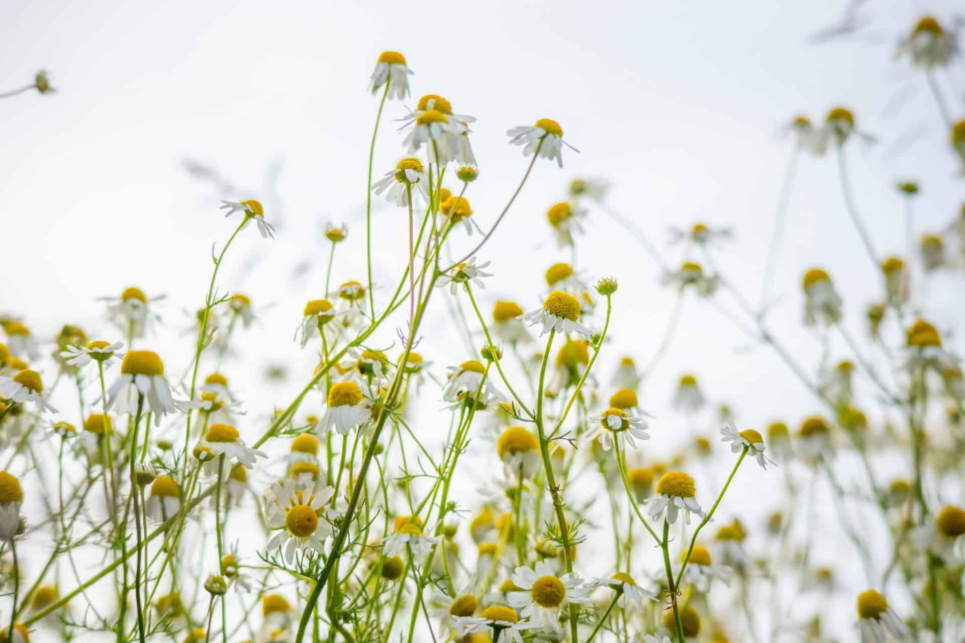 Modern Botany Natural Products